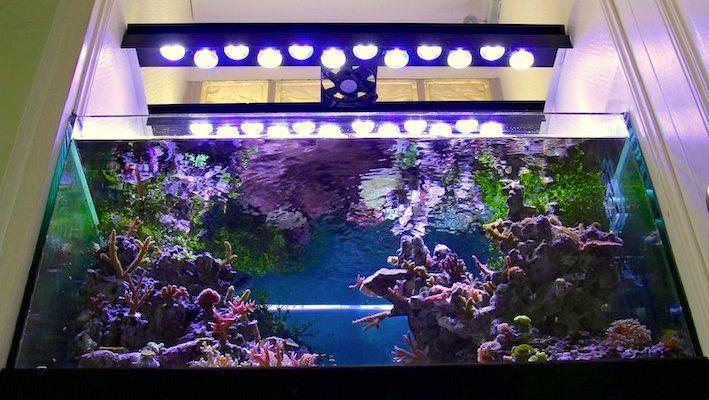 L'industrie propose déjà des rampes équipées de lampes à LED, comme cela a été abordé dans ZebrasO'mag N°8. Il est également possible d'envisager la fabrication artisanale de ce type de rampe pour une application plus personnalisée. Photo : Jean-Louis Cuquemelle