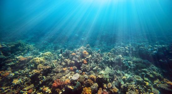 Les récentes résurrections de récifs dévastés par de fortes périodes de blanchiment laissent entendre à quelques scientifiques que les coraux modifient leur symbiose avec les différentes populations de zooxanthelles disponibles dans la nature. Photo : vovan