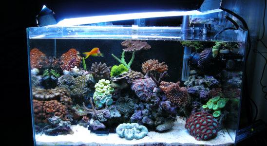 Quelques clés fondamentales gouvernent la réalisation d'un décor harmonieux, pratique et biologique, dans un petit aquarium où l'espace est compté. Photo : Jonathan Gekiere