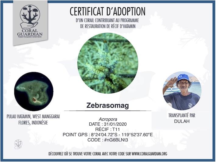 ZebrasO'mag à adopté son corail !
