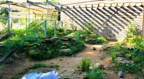 À la fin de l'été, la végétation a bien démarré malgré les assauts des tortues qui n'hésitent pas à gravir les buttes à la recherche de nourriture ou pour se réfugier à l'ombre des arbustes. En s'étoffant durant les prochaines années, les arbustes et graminées devraient progressivement donner plus de présence aux buttes.