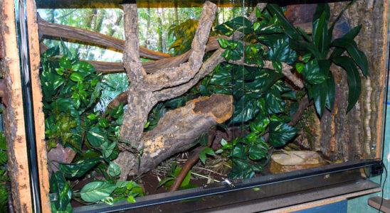 Vue générale du terrarium du mâle.