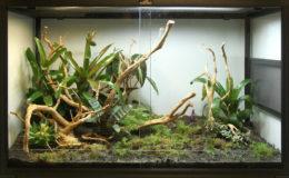 Terrascaping dans un terrarium Reptiles Planet. Photo : G. Allain