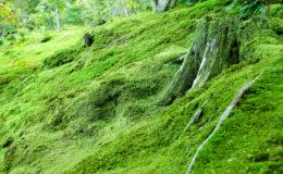 L'équilibre de l'environnement repose sur le cycle de la matière, en terrarium comme dans la nature. Photo : A. Altenburger - Fotolia