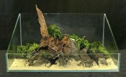 Les végétaux d'arrière-plan sont enfin ajoutés. Contrairement aux plantes épiphytes dont les racines ne nécessitent pas d'être enfouies dans un substrat meuble, il s'agit là de végétaux à tiges à fixer dans un sol nutritif. En poussant, ces plantes vont reconstituer les massifs du fond.