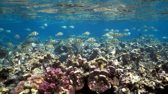 Le pH (potentiel hydrogène) quantifie l'acidité de l'eau. Cet indicateur est intéressant en aquariophilie marine car ces fluctuations peuvent traduire certains dérèglements. Photo : Aqua Press