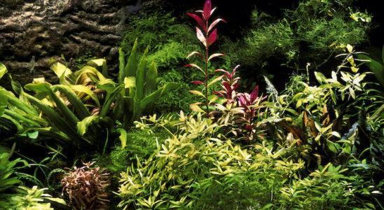 Ca y est, le décor de l'aquarium est terminé et les plantes sont enfin installées. Le filtre tourne bien et la température est idéale. C'est le moment où l'aquariophile débutant veut vite aller choisir ses premiers poissons. Stop ! Si l'installation « en dur » est bouclée, il manque encore une étape cruciale à la bonne santé des animaux : l'accomplissement de l'équilibre biologique (et chimique…) connu sous le nom de cycle de l'azote. Photo : Aqua Press