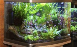Les plus grands des nano-aquariums présentent l'avantage d'avoir un volume suffisant pour une meilleure inertie des paramètres, qu'il s'agisse de la qualité de l'eau ou encore de la température. Photo : Aqua Press