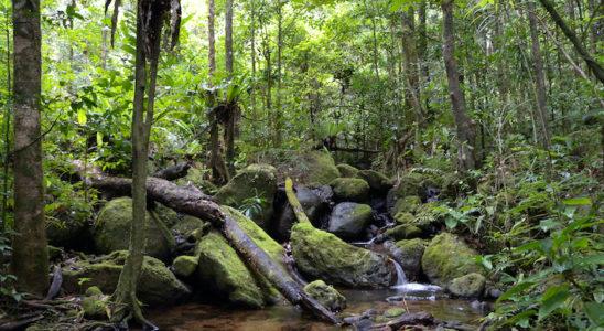 Ambiance typique de la forêt tropicale de plaine de la péninsule de Masoala. Photo : Frank Vassen