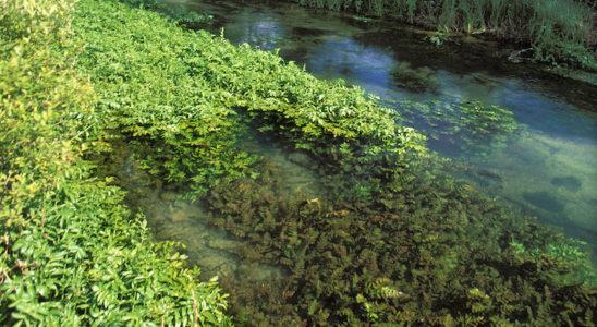 Les cours d'eau naturels sont une source d'inspiration évidente pour l'aménagement du bassin, notamment au niveau des végétaux qui y poussent, adaptés au climat de nos latitudes. Photo : Aqua Press