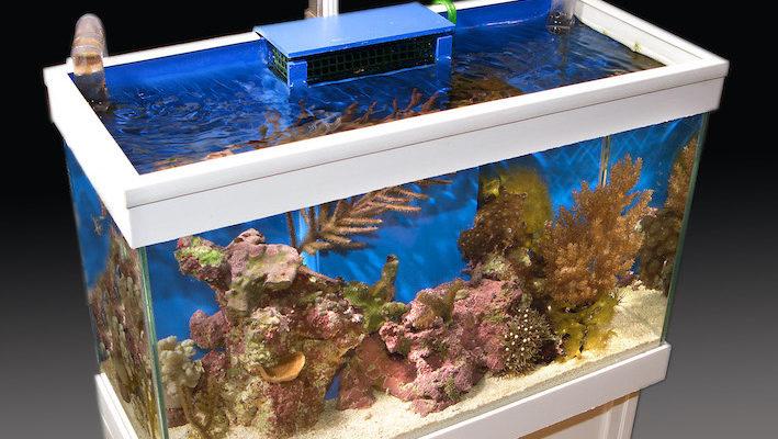 La gestion thermique est certainement la partie critique de la maintenance d'un nano-récif. Photo : Aqua Press