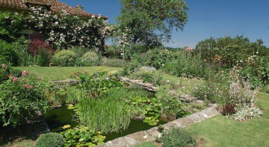 Avant d'arriver à un bassin bien planté, il convient dès le départ de choisir les plantes adaptées à la région et d'offrir un substrat riche en engrais qui va leur permettre le meilleur départ. Photo : Aqua Press
