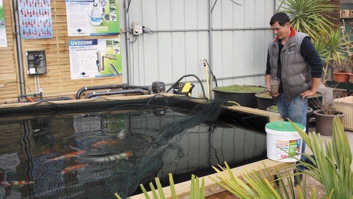 L'installation de la filtration est enfin terminée. Tout se passe à merveille, les pensionnaires ont été introduits dans le bassin 48 heures seulement après sa mise en eau. Un bon ensemencement bactérien ainsi qu'un équilibre minéral le permettent. Les tests successifs ont démontré un 0 pointé en ammoniaque et en nitrites. Photo : Aquatic-Science