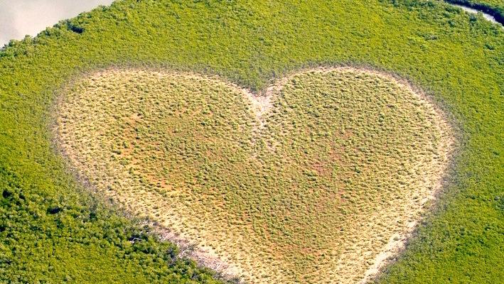 La mangrove de la Nouvelle-Calédonie borde 200 km2 de côtes. C'est de cet habitat que naissent et se développent des milliers de poissons juvéniles destinés à peupler les récifs coralliens adjacents par la suite. La mangrove est au cœur de la naissance de la vie ; le « Cœur de Voh » (en Nouvelle-Calédonie) nous le rappelle de manière spectaculaire. Photo : Greg