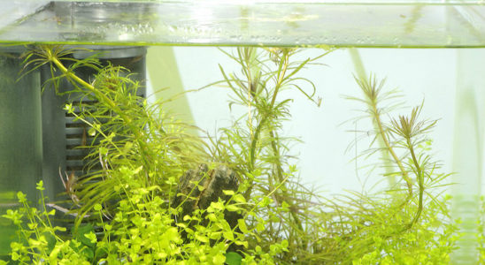 La tenue impeccable du nano-aquarium ne se fait pas sans une certaine rigueur. Changements d'eau, contrôle des paramètres, nettoyage des vitres et autres tâches sont au menu. Du fait de dimensions modestes, ces activités restent heureusement un plaisir pour l'aquariophile. Photo : Aqua Press