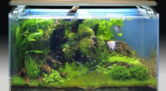 L'aquarium réussi ne concerne pas que le décor, même si ce dernier est évidemment très important. Le choix de la population va déterminer l'harmonie de l'ensemble. Photo : Aqua Press (Tropica)