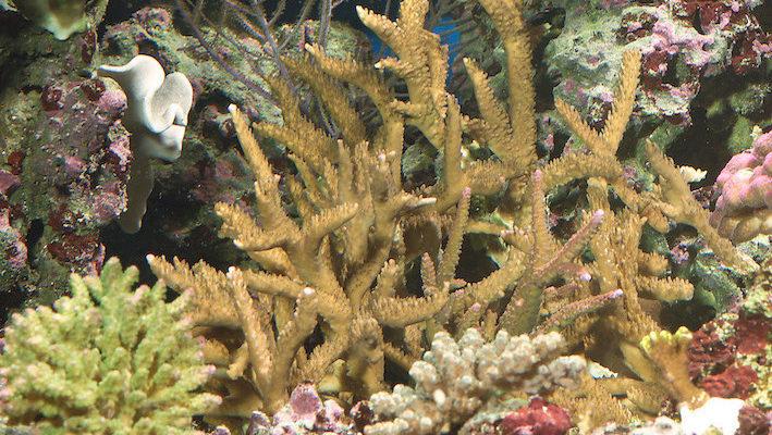 Il existe de nombreuses façons d'augmenter le volume d'eau d'un petit aquarium marin grâce au principe du refuge. Photo : Aqua Press